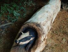 Frenches wood wildlife